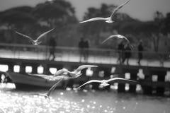 Seemöwen, die nahe einer Anlegestelle fliegen Stockbild
