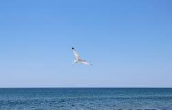 Seemöwen, die nahe Strand fliegen Lizenzfreies Stockbild