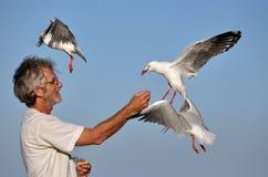 Seemöwen, die von der Hand des Mannes auf Strand speisen Stockbild