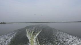 Seemöwen, die von hinten ein Fischerboot 4K mit Audio folgen stock video