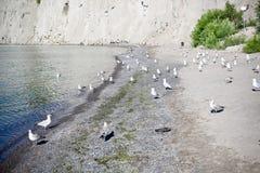 Seemöwen entlang der Küstenlinie stockbild
