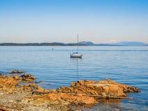 Seemöwen am felsigen Ufer von Sidney BC, Kanada Lizenzfreie Stockbilder