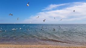 Seemöwen fliegen über die Küste stock video