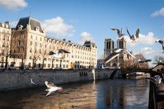 Seemöwen fliegen über Notre- Damekathedrale in Paris Lizenzfreies Stockfoto