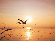 Seemöwen fliegen in den gelben Sonnenuntergang Stockfoto