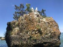 Seemöwen gehockt auf Boulder stockfoto