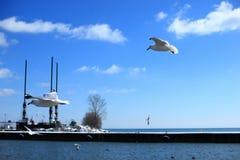 Seemöwen am Hafen Dover, Ontario stockbilder
