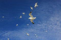 Seemöwen im Himmel Stockfotos