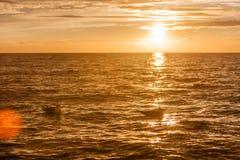 Seemöwen im Sonnenuntergang Lizenzfreie Stockbilder