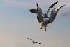 Seemöwen leben auf den Wolken Lizenzfreie Stockfotografie