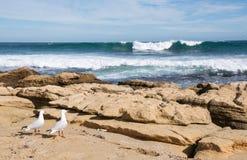 Seemöwen: Ozean-Meditation Lizenzfreie Stockfotografie
