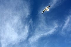 Seemöwen schließen Fliegen Stockbilder