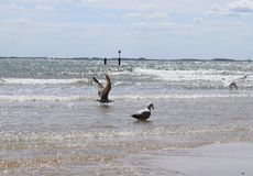 Seemöwen am Strand Lizenzfreie Stockbilder