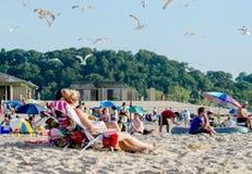 Seemöwen teilen den Strand mit vielen Leuten Lizenzfreie Stockfotografie