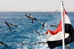 Seemöwen und Ägypten-Markierungsfahne Lizenzfreies Stockbild