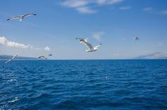 Seemöwen und blaues Meer Lizenzfreie Stockfotografie
