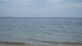 Seemöwen und ein Schiff auf Skylinen, Vogelfliegen stock footage