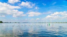 Seemöwen und Enten auf dem Veluwemeer in den Niederlanden mit Windkraftanlagen in einem großen Windpark Lizenzfreie Stockfotos