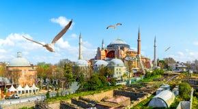 Seemöwen und Hagia Sophia lizenzfreie stockbilder