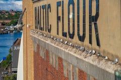 Seemöwen und ihre Küken nisteten auf der Wand des baltischen Centr stockbilder
