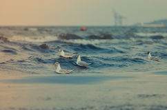 Seemöwen und Meer Stockbilder