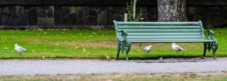 Seemöwen unter einer Bank in einem Park Stockbild