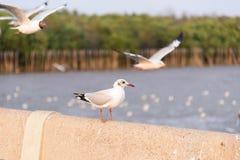 Seemöwen-Vogel-Meer Lizenzfreie Stockfotografie