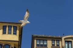 Seemöwenfliegen in der Straße Lizenzfreies Stockfoto