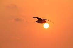 Seemöwenfliegen im Himmel mit Sonnenuntergang Stockfotos