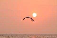 Seemöwenfliegen im Himmel mit weit offenen Flügeln Lizenzfreie Stockbilder