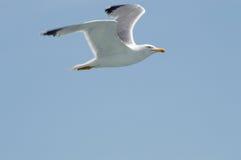 Seemöwenfliegen nach dem Meer Lizenzfreies Stockfoto