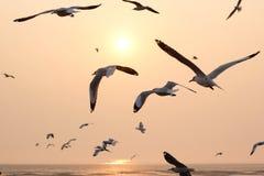 Seemöwenfliegen zur Sonnenuntergangzeit Lizenzfreie Stockfotografie