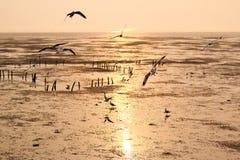 Seemöwenfliegen zur Sonnenuntergangzeit Lizenzfreie Stockbilder