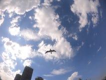 Seemöwenflug im blauen Himmel mit einigen Wolken auf Barra da Tijuca u. dem x27; s-Strand, Rio de Janeiro - Brasilien stockfotos