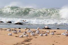 Seemöwenmenge am Strand durch stürmisches Meer lizenzfreie stockfotografie