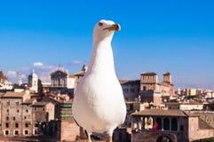 Seemöwennahaufnahme mit italienischer mittelalterlicher Stadt lizenzfreie stockfotos