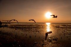 Seemöwenschattenbilder im Flug auf Sonnenaufgang Stockfoto