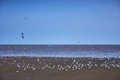 Seemöwenvögel scharen sich auf ruhigen Strand stockfoto