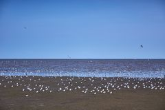 Seemöwenvögel scharen sich auf ruhigen Strand lizenzfreie stockfotos