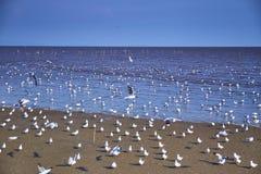 Seemöwenvögel scharen sich auf ruhigen Strand stockbilder