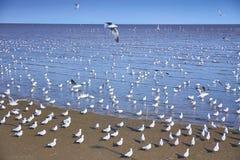 Seemöwenvögel scharen sich auf ruhigen Strand lizenzfreies stockfoto