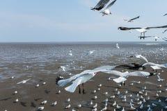 Seemöwenvogel in dem Meer Bangpu Samutprakarn Thailand stockfotografie