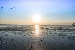 Seemöwenvogel mit Himmel und Meer auf Sonnenuntergangzeit Stockbild