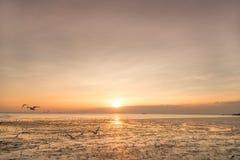 Seemöwenvogel mit Himmel und Meer auf Sonnenuntergangzeit lizenzfreies stockbild