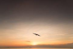 Seemöwenvogel mit Himmel und Meer auf Sonnenuntergangzeit lizenzfreies stockfoto