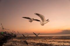 Seemöwenvogel mit Himmel und Meer auf Sonnenuntergangzeit Stockfoto