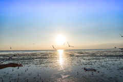 Seemöwenvogel mit Himmel und Meer auf Sonnenuntergangzeit Stockfotografie