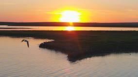 Seemöwenvogelfliege über dem Fluss zur Sonnenuntergangzeit Vögel fliegen bei Sonnenuntergang Sonnenuntergang auf dem Fluss, von d Lizenzfreie Stockfotografie