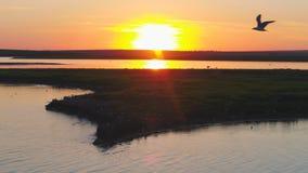 Seemöwenvogelfliege über dem Fluss zur Sonnenuntergangzeit Vögel fliegen bei Sonnenuntergang Sonnenuntergang auf dem Fluss, von d Stockfoto