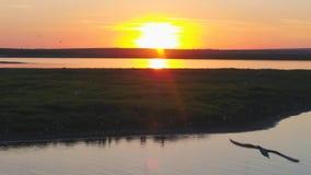 Seemöwenvogelfliege über dem Fluss zur Sonnenuntergangzeit Vögel fliegen bei Sonnenuntergang Sonnenuntergang auf dem Fluss, von d Stockbild